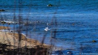 4 9 18 Day 2 Montauk NY Montauk Point State Park & Montauk Point Lighthouse (36 of 42)