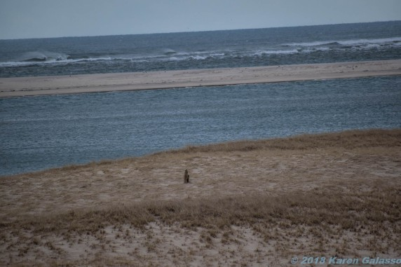 Bodies of Water of the Cape & Area 3-9 & 3-10 2018 (24 of 58)