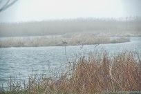 4 26 18 Nantucket birds (10 of 11)