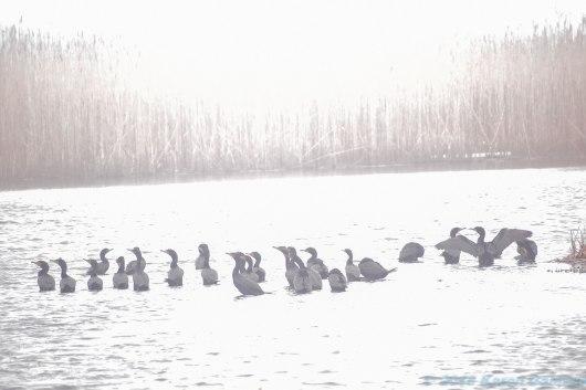 4 26 18 Nantucket birds (5 of 11)