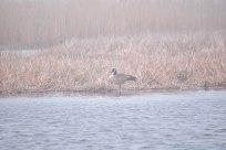 4 26 18 Nantucket birds (9 of 11)