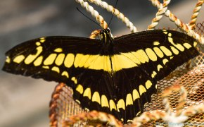 5 13 18 Mackinac Island MI Butterfly House (6 of 21)