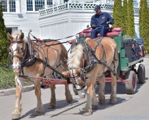 5 13 18 Mackinac Island MI Horses & Buggys (8 of 16)