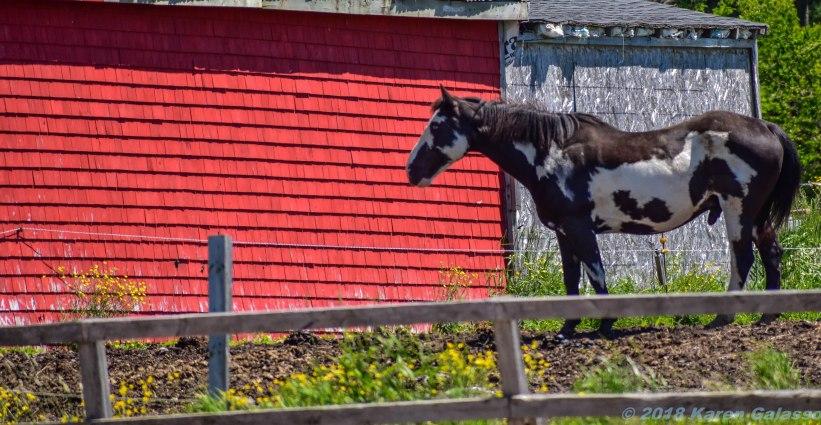 6 22 18 Horses #2 (1 of 3)