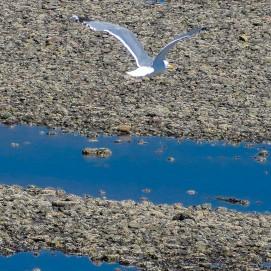 6 24 18 Five Island Provincial Park NS (11 of 16)