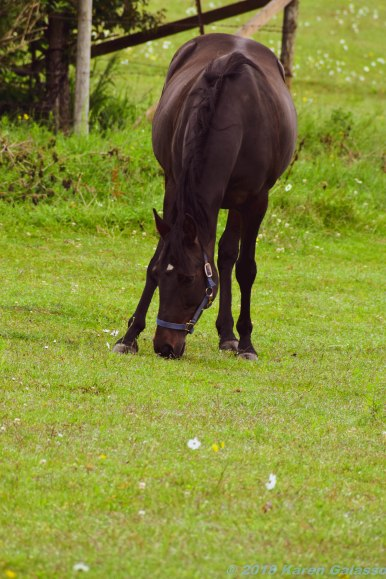 6 24 18 Horses (7 of 7)