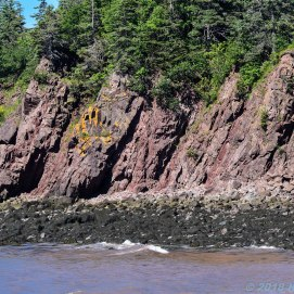 6 27 18 Fundy Coast to Fundy Shore Tour Saint John (14 of 16)