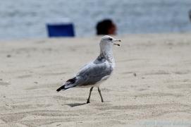 8 15 18 Seaside Park Stratford CT (4 of 13)