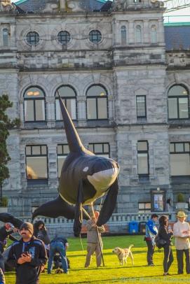 10 12 18 All around Victoria Vancouver Island BC Canada (10 of 26)