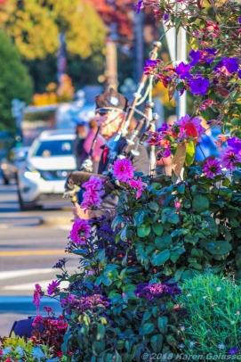 10 12 18 All around Victoria Vancouver Island BC Canada (9 of 26)
