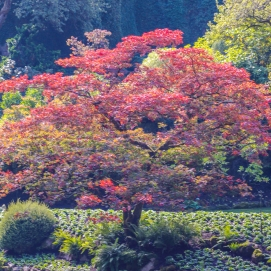 10 12 18 Inside Butchart Gardens Vancouver Island BC Canada (4 of 32)