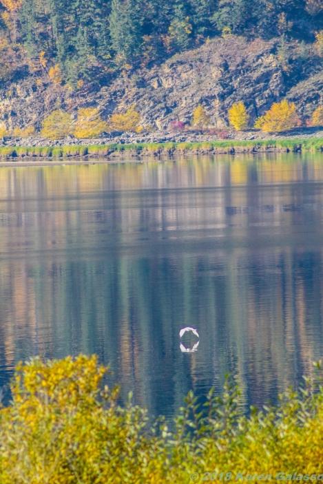 10 15 18 Mara Lake BC Canada (3 of 14)