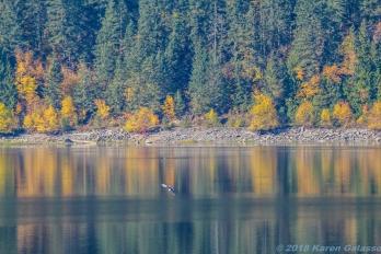 10 15 18 Mara Lake BC Canada (4 of 14)