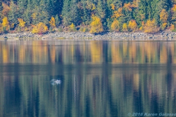 10 15 18 Mara Lake BC Canada (5 of 14)