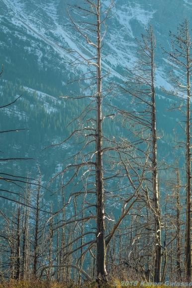 10 18 18 Glacier National Park MT (6 of 7)