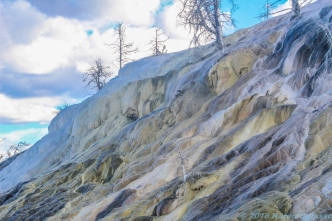 10 22 18 Mammoth Hot Springs Yellowstone MT (6 of 13)
