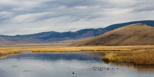 10 26 18 National Elk Refuge Casper WY (1 of 10) (3)