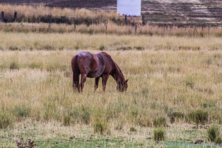10 6 18 Horses in the WA state countryside (3 of 3)