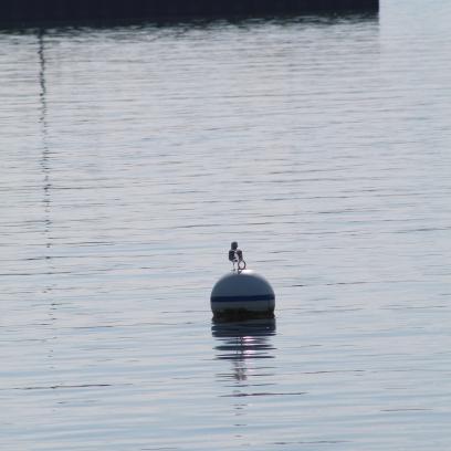 9 18 18 Lorain OH Marina & Lighthouse (1 of 6)