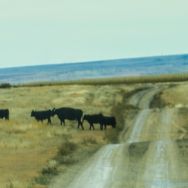 10 30 18 On the road from Colby KS to Quinter KS (11 of 18)