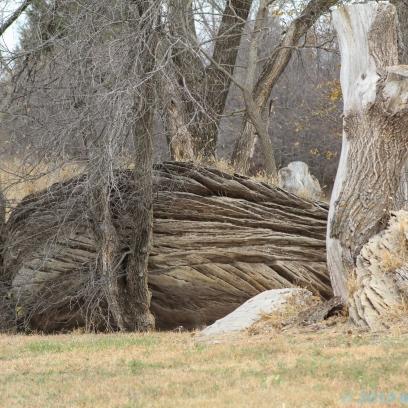 10 31 18 Mushroom Rock State Park Brookville KS (7 of 11)
