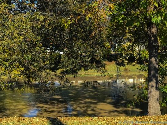 11 18 18 Deer Creek Leland MS (1 of 3)