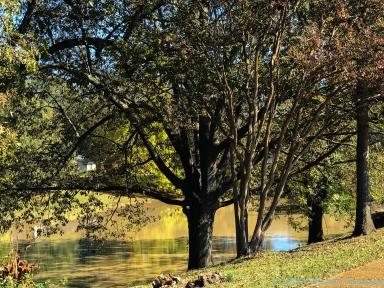11 18 18 Deer Creek Leland MS #2 (3 of 3)