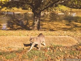 11 18 18 Deer Creek Leland MS (2 of 3)