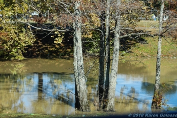11 18 18 Deer Creek Leland MS #3 (2 of 6)