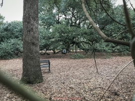 3 3 20 Angel Oak Johns Island SC closed so pictures through the fence (2 of 5)