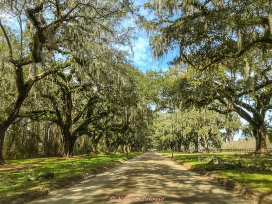 3 3 20 Avenue of Oaks & Boone Hall Plantation Charleston SC (1 of 36)