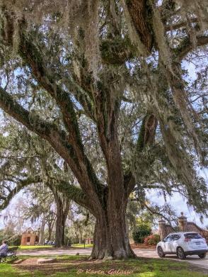 3 3 20 Avenue of Oaks & Boone Hall Plantation Charleston SC (10 of 36)