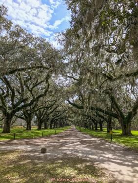 3 3 20 Avenue of Oaks & Boone Hall Plantation Charleston SC (12 of 36)