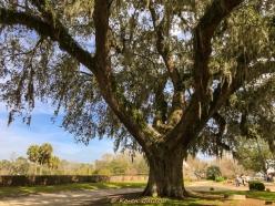 3 3 20 Avenue of Oaks & Boone Hall Plantation Charleston SC (15 of 36)
