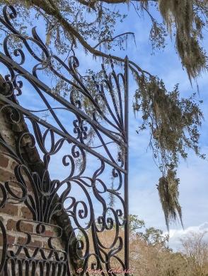 3 3 20 Avenue of Oaks & Boone Hall Plantation Charleston SC (18 of 36)