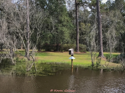 3 3 20 Avenue of Oaks & Boone Hall Plantation Charleston SC (35 of 36)