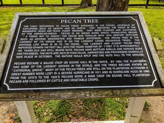 3 3 20 Avenue of Oaks & Boone Hall Plantation Charleston SC (9 of 36)