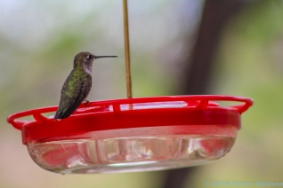 5 10 19 Lack of a better name...Hummingbirds Sedona AZ I did not log & can not find a site that relates (13 of 23)