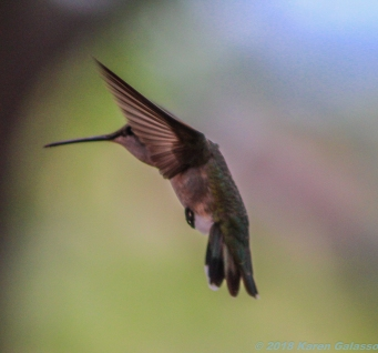 5 10 19 Lack of a better name...Hummingbirds Sedona AZ I did not log & can not find a site that relates (16 of 23)