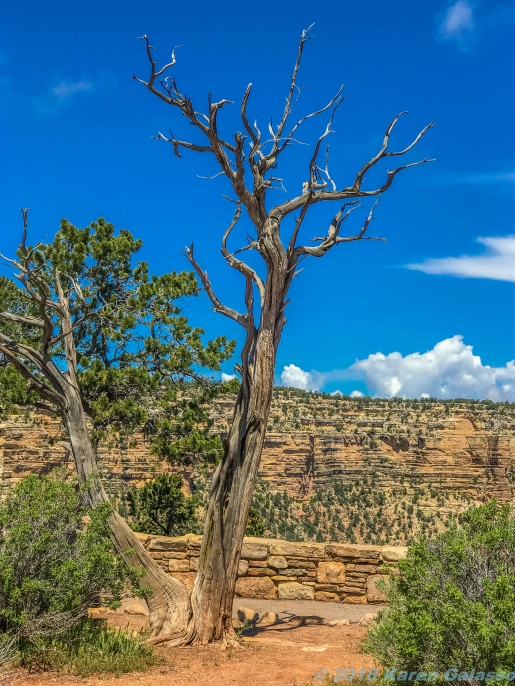 5 11 19 Hopi House View Point South Rim Grand Canyon AZ #2 #2 (7 of 8)