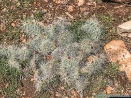 5 11 19 Mather Point & View South Rim Grand Canyon AZ #2 (19 of 21)