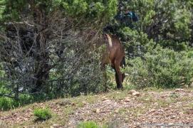 5 11 19 Mule Deer of the South Rim Grand Canyon AZ (3 of 10)