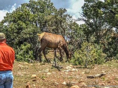 5 11 19 Mule Deer of the South Rim Grand Canyon AZ (9 of 10)