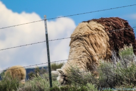 5 14 19 Alpaca Mora NM (3 of 8)
