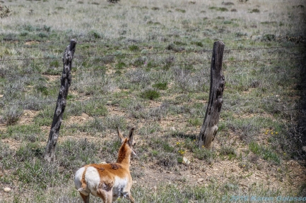 5 14 19 deer caught on the wrong side of the fence NM (1 of 14)