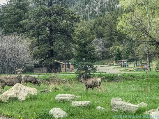 5 14 19 herd of deer on the side of the road KS (1 of 10)