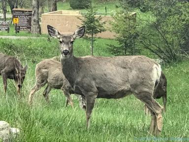 5 14 19 herd of deer on the side of the road KS (10 of 10)