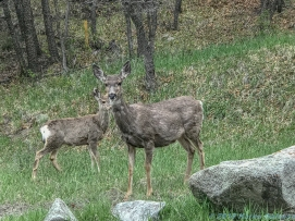 5 14 19 herd of deer on the side of the road KS (3 of 10)
