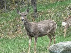5 14 19 herd of deer on the side of the road KS (4 of 10)