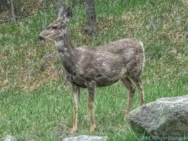 5 14 19 herd of deer on the side of the road KS (5 of 10)